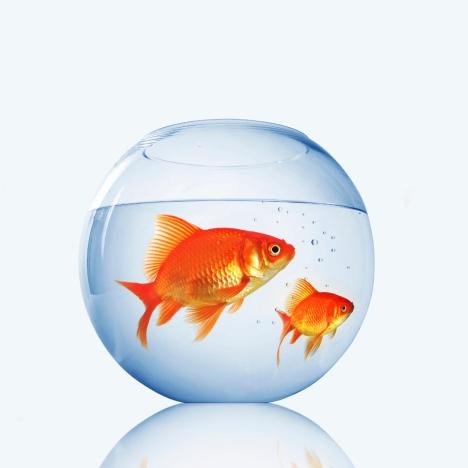 fish-bowl-1